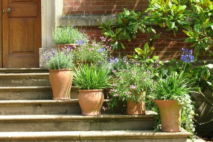 C mo crear un jard n en macetas guia de jardin for Decoracion de patios con macetas