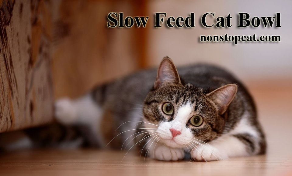 Slow Feed Cat Bowl