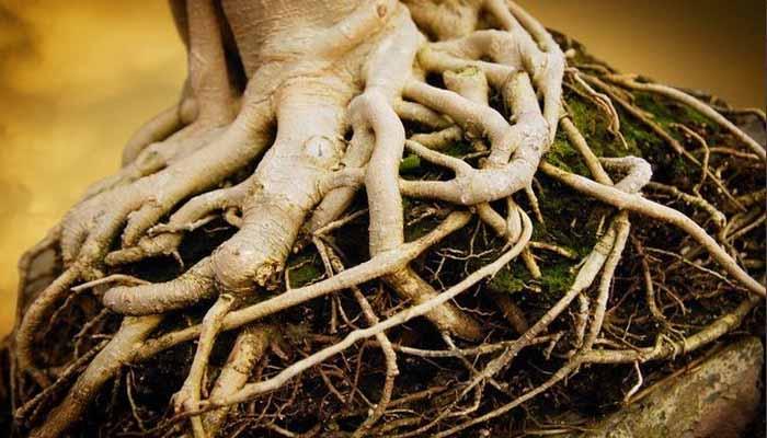 7 Fungsi Akar Pada Tumbuhan Dan Penjelasannya