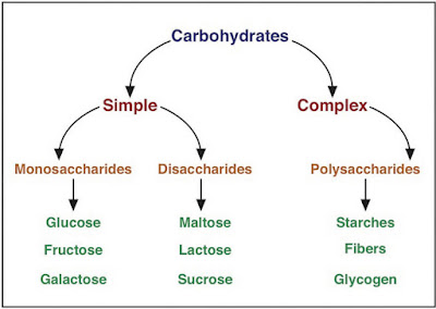 The BioLogs: CAPE 1: carbohydrates