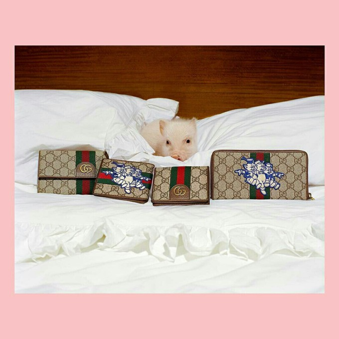 Ano do porco chinês e a campanha da Gucci