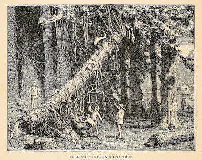 dibujo de hombres talando un arbol de quina