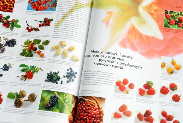 Wnętrze książki, owoce
