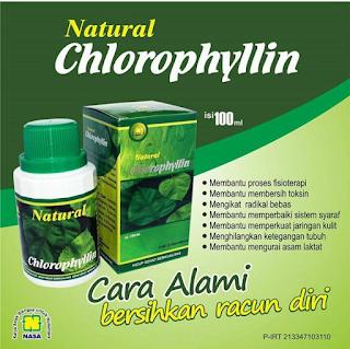 agen chlorophyllin nasa jogja