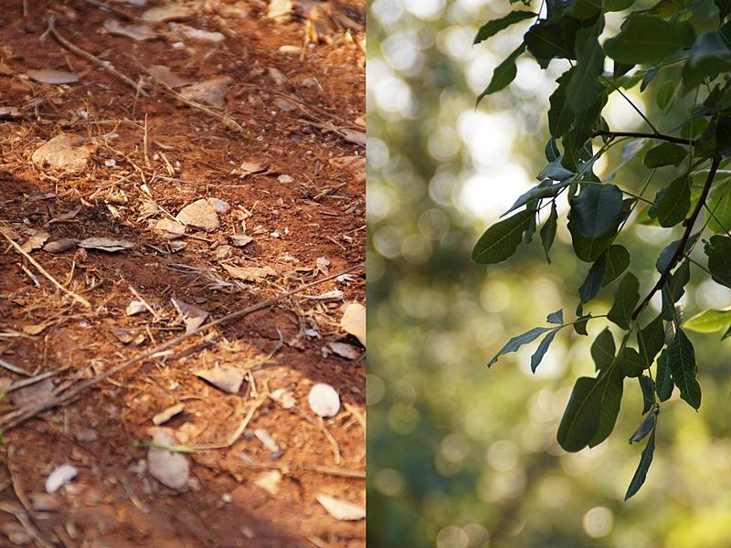 Kroatien Natur, Boden und Pflanzen, Sommerurlaub, Campingurlaub Fotos August