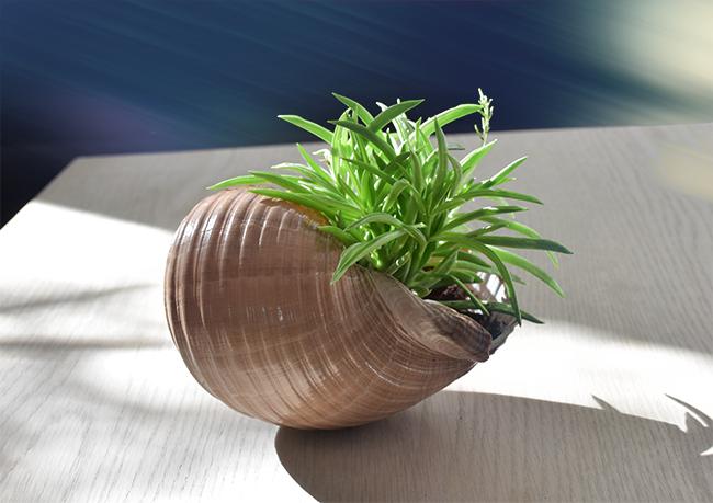 lulusuperglu un coquillage g ant transform en pot de fleur. Black Bedroom Furniture Sets. Home Design Ideas