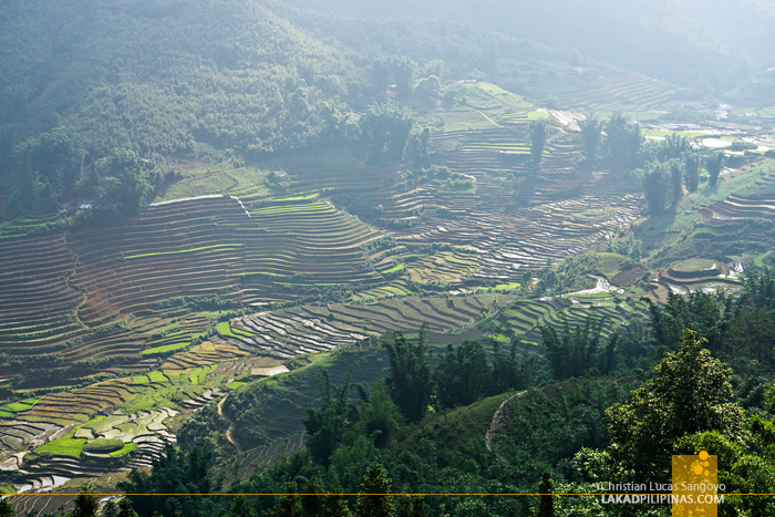 Easy Hike Rice Terraces Sapa Vietnam