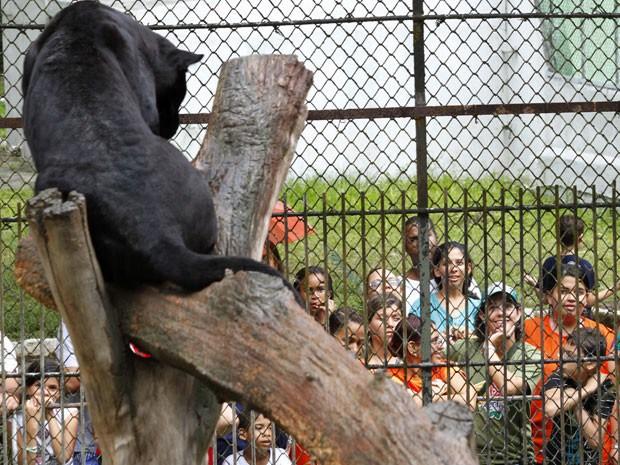 Semana da Criança será repleta de atrações no zoológico do Recife