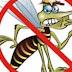 Vacina contra a dengue deve ser usada em larga escala a partir de 2019