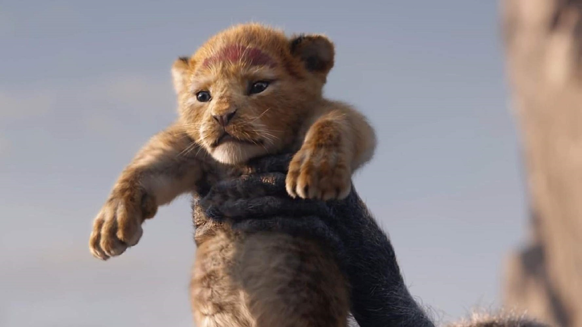 The Lion King 2019 Wallpapers