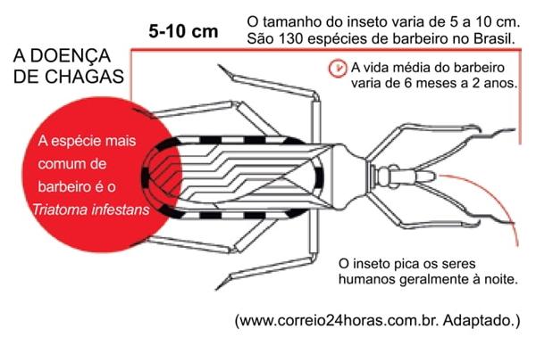 a-figura-apresenta-algumas-caracteristicas-do-barbeiro-inseto-relacionado-a-doenca-de-chagas
