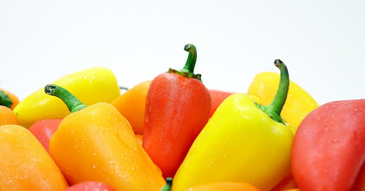 Peppers, Large Yield Crop Focus