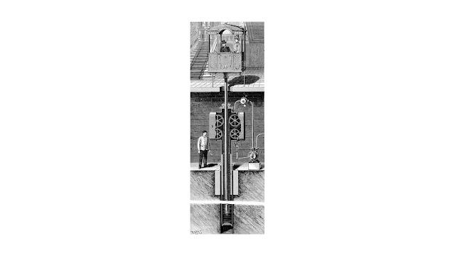 Anthurus d'Archer - Ascenseur pour les chaffouins