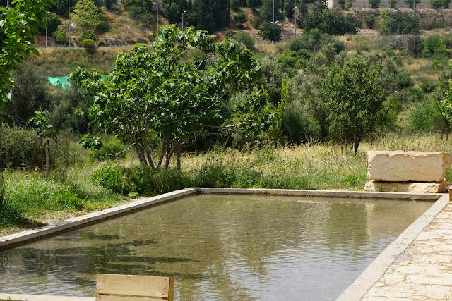 בריכת מים בעמק הצבאים ירושלים