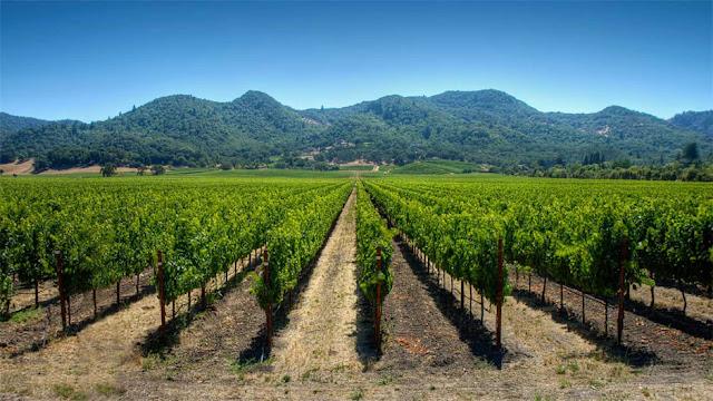 Dicas importantes para a visita às vinícolas