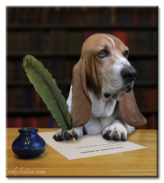 Bentley Basset Hound writing with feather pen