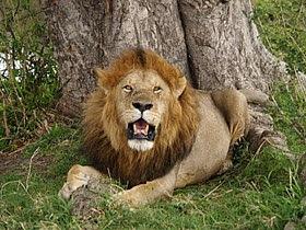 الحيوانات المفترسة في تونس