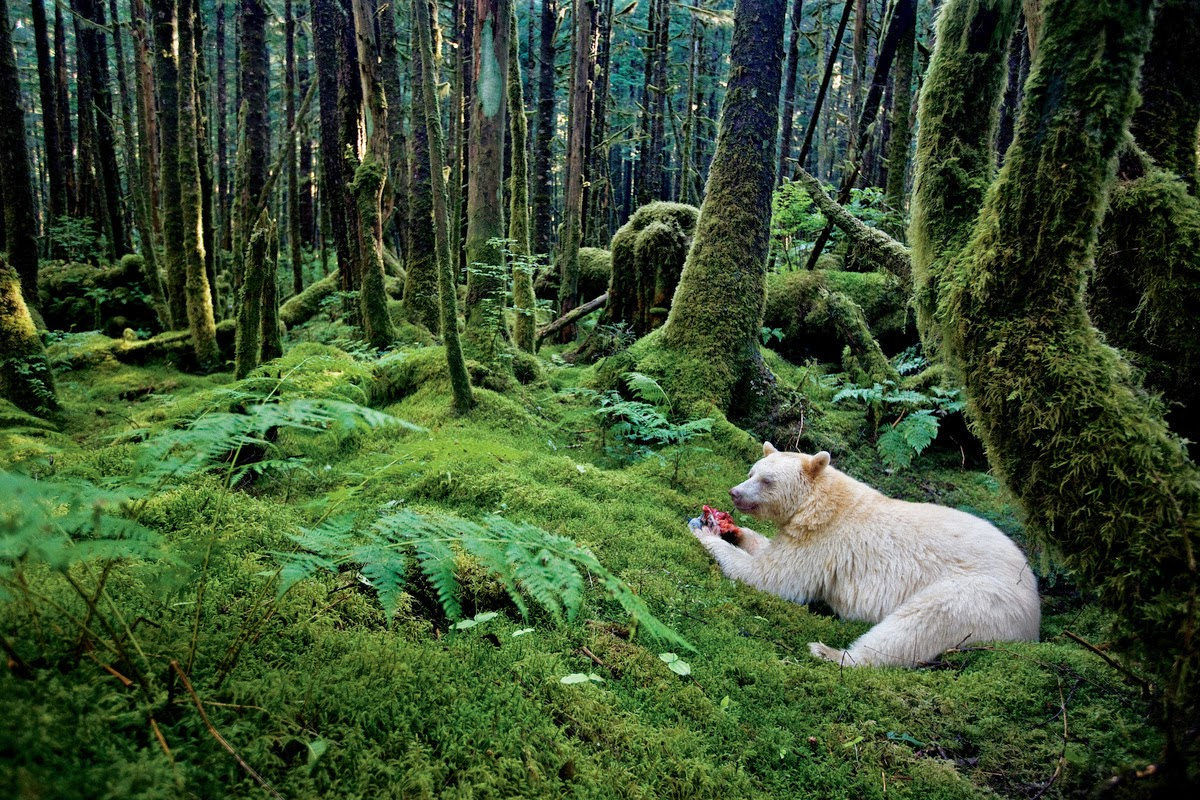 The Great Bear Rainforest 10 Worlds Amazing And Beautiful Forests