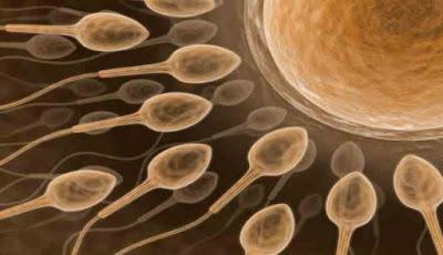 cara tingkatkan kesuburan sperma pria tips suami istri puas