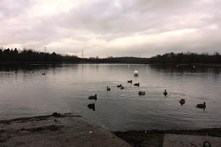Monochrome photo of birds on the lake
