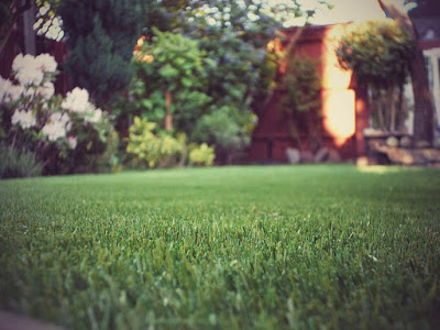 cleaning artificial grass for dogs