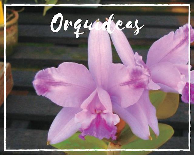 Tudo sobre orquideas