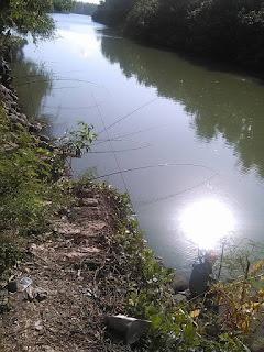 memancing belanak umpan lumut