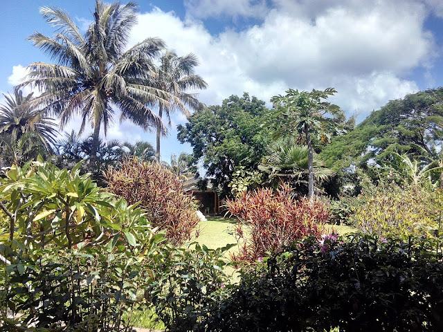 Vegetación Isla de Pascua