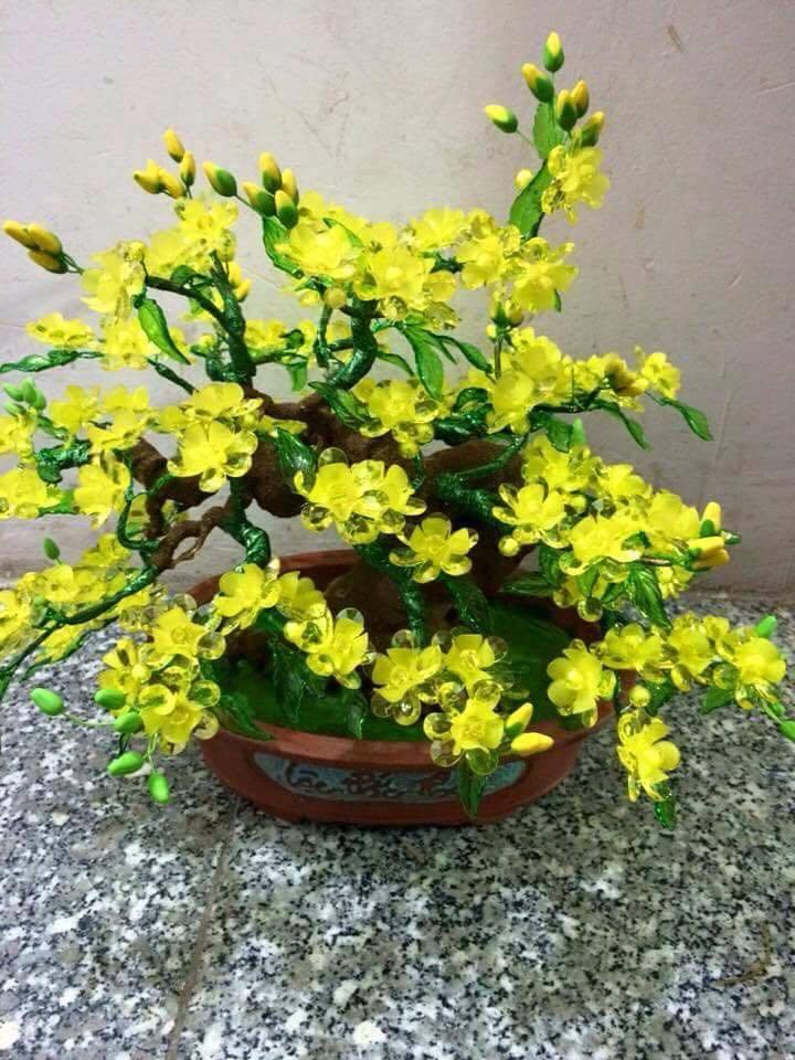 Goc bonsai mai dao cay hoa mai o Au Trieu