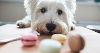 Biscoitos canino