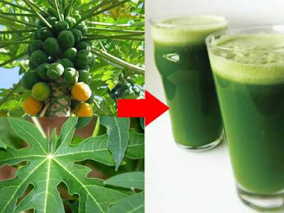 How To Permanently Cure Ulcer With Raw Pawpaw Water - Health - Nigeria