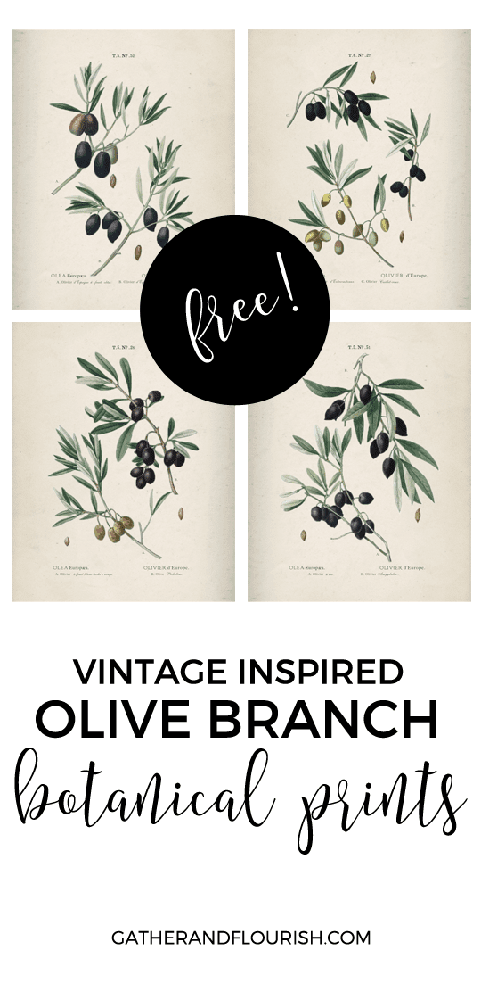 Olive branch printables