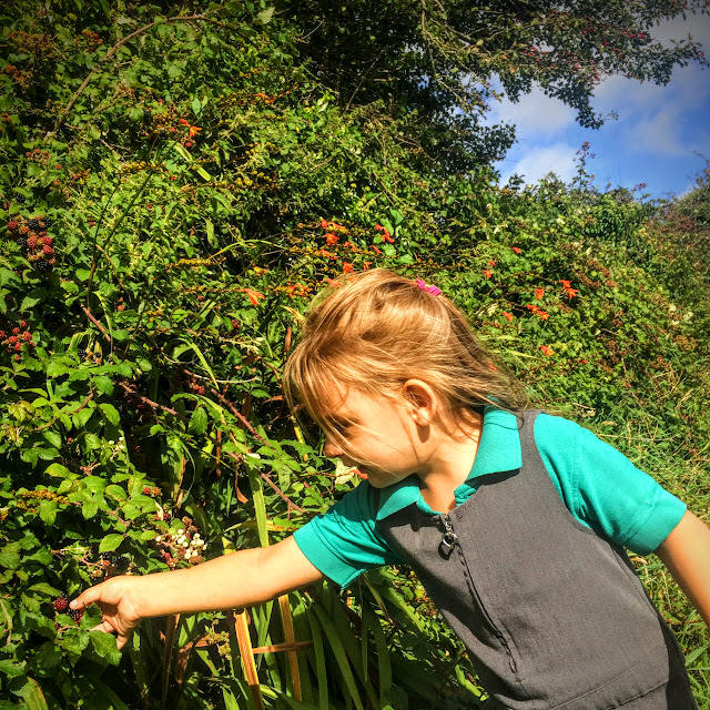 picking blackberries, foraging, brambles, dandelion, wish, make a wish, school runs, pembrokeshire, rural life, everyday, nature walk,