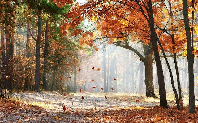 Herfstbladeren vallen van de boom