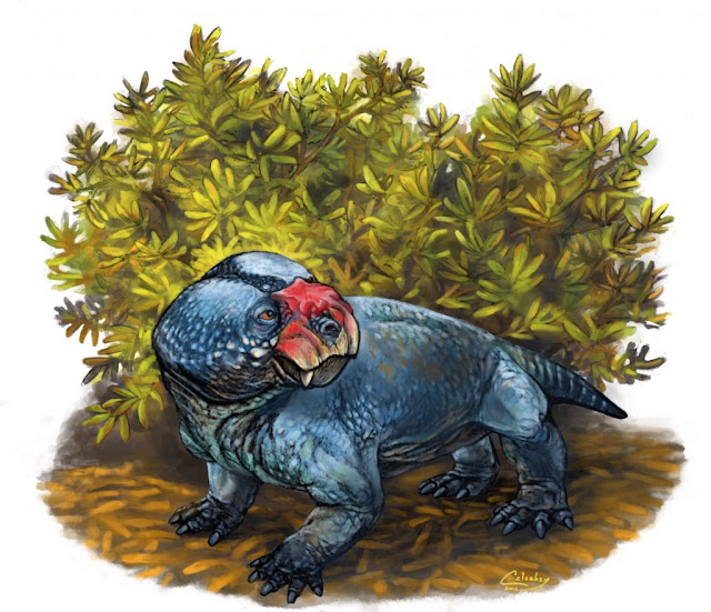 New species of dicynodont from the Karoo Basin of South Africa
