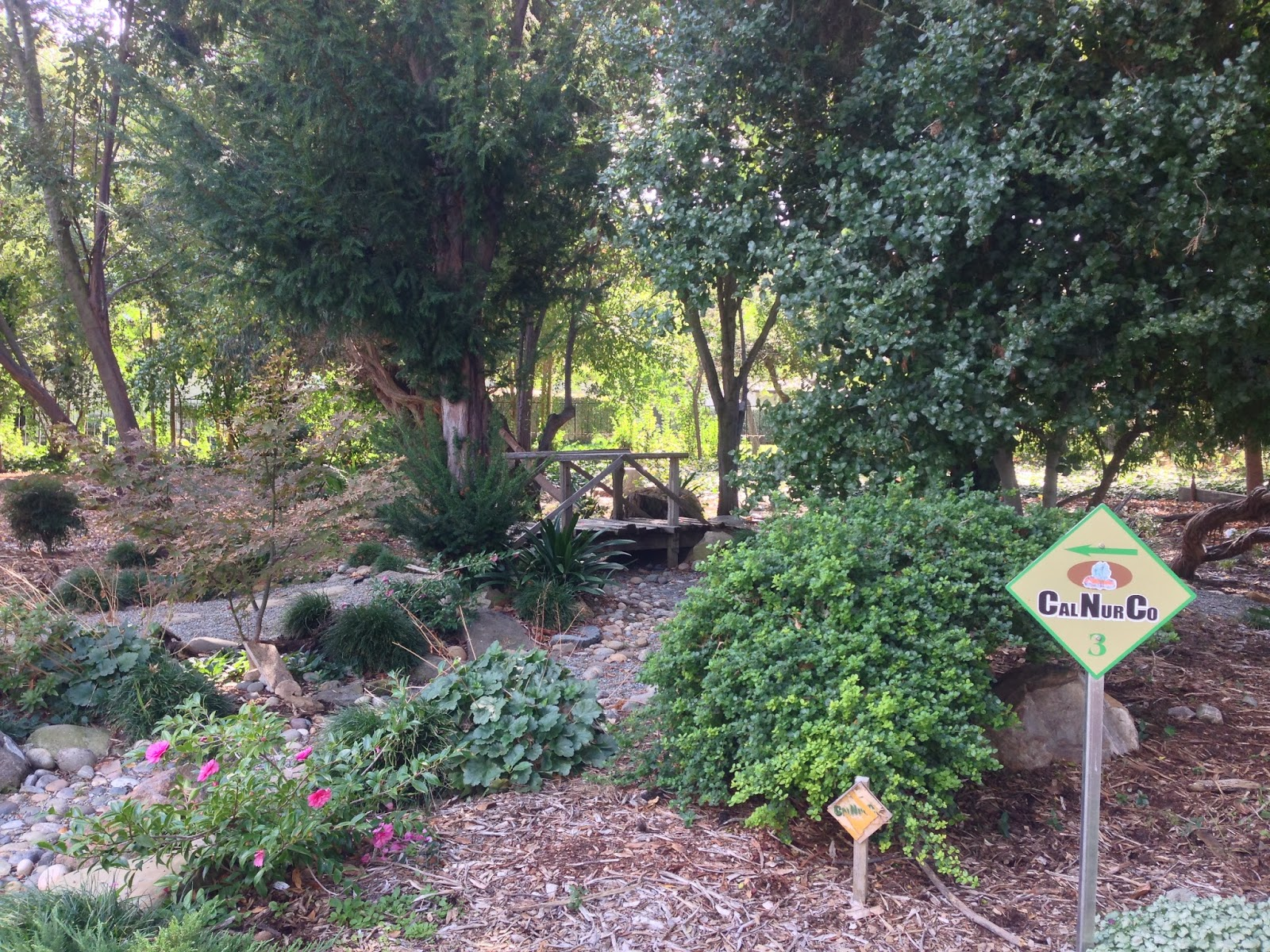 A Small Pond Arch Bridge And Trees From An Asia Were Featured Here California Nursery Sold Variety Of Ornamental Plants Frequently The