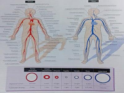 Gambar Anatomi Fisiologi Jaringan Saraf Manusia