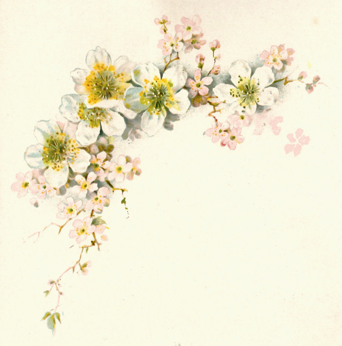 Vintage Flower Art 42