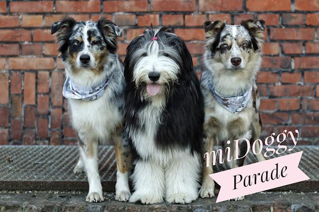 Hundefotografie, Hundeblog, Bearded Collie, Hütehund