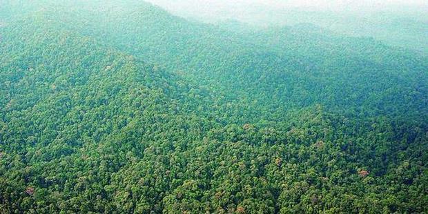 Hutan Tropis Indonesia Dikagumi Dunia Karena Empat Ini