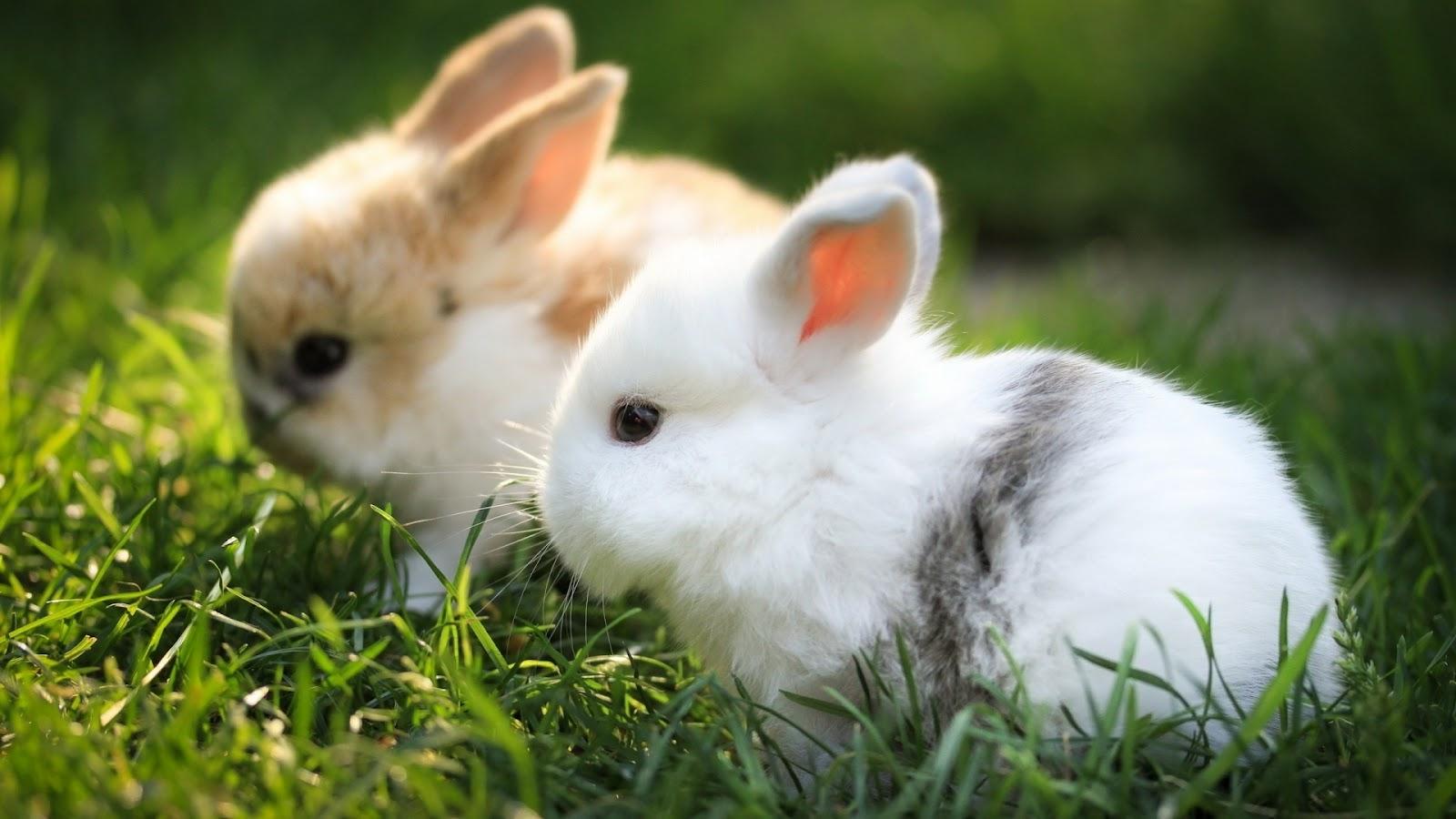 cute rabbit wallpaper - photo #1