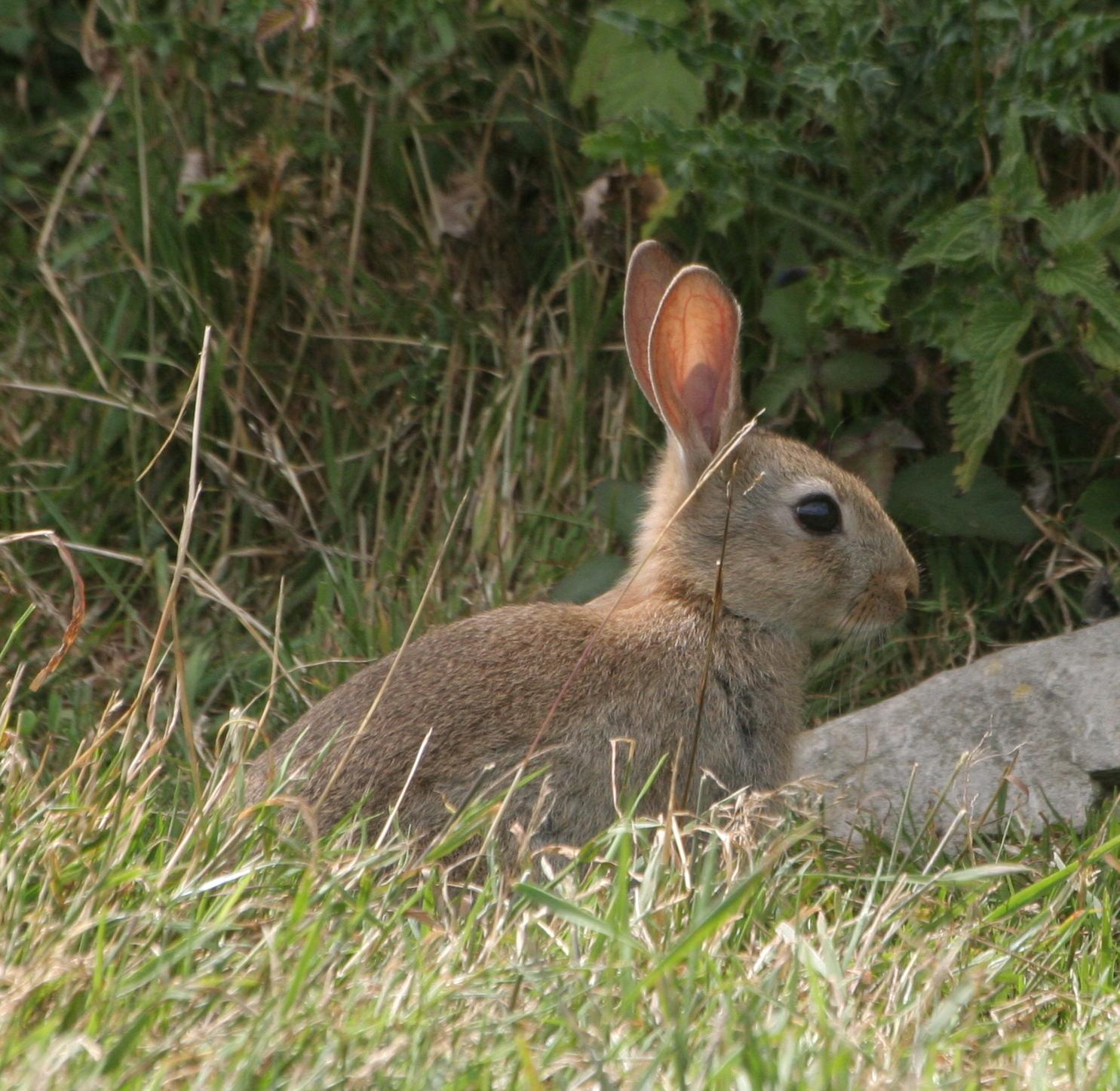 Wild rabbit images  Funny Animal
