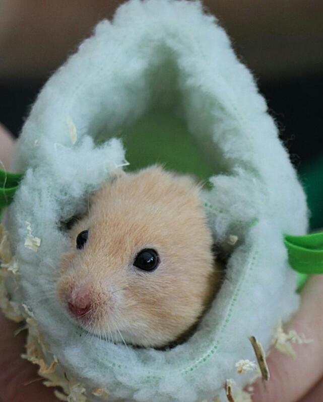 Hamsterrad vs. Schlafattacke