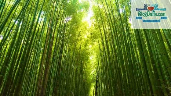 Jenis bambu hias pagar