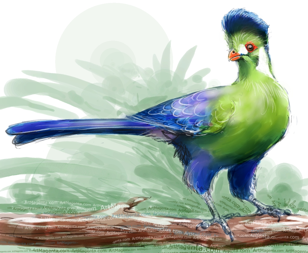 White-cheeked Turaco sketch painting. Bird art drawing by illustrator Artmagenta