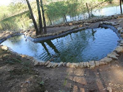 Lago artificial para patos