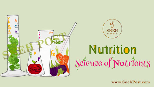 Nutrition Science Wonders: Meaning and Basics