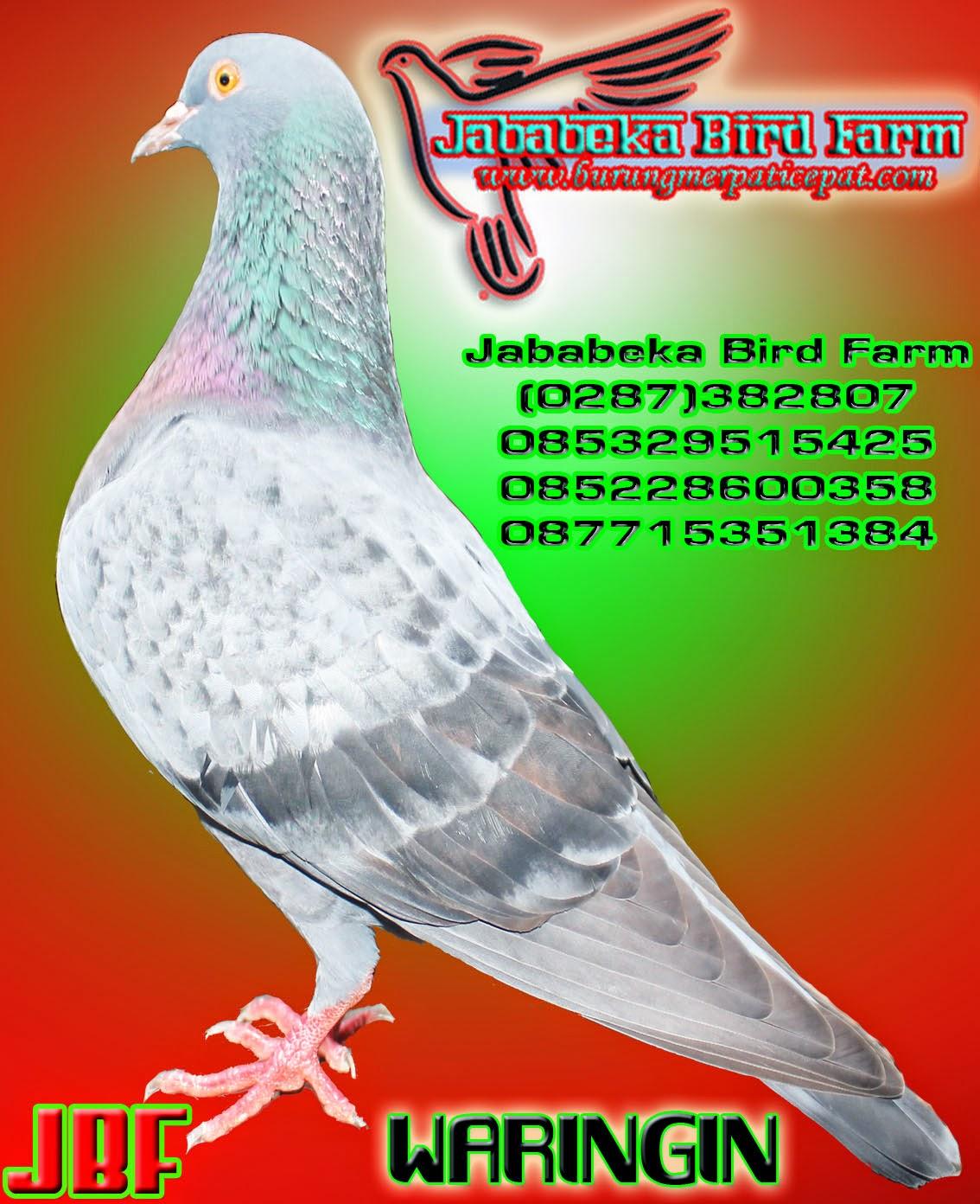 0287 382807 085228600358 085329515425 Sejarah Burung