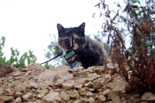 Adventure Cat Tips - feeding your cat on a hike