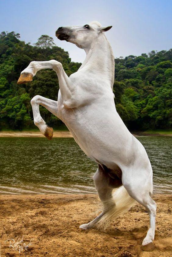 Cavalos | Horse